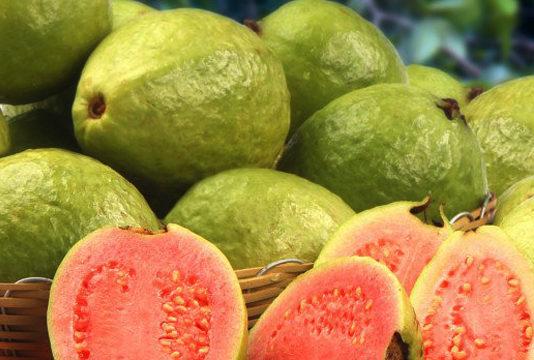 Guava Medicinal Fruit