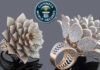 Indian Jeweller Sets Guinness World Record with his Diamond Ring